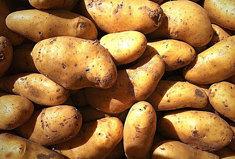 Potatoes - Apulian Cooking - Puglia