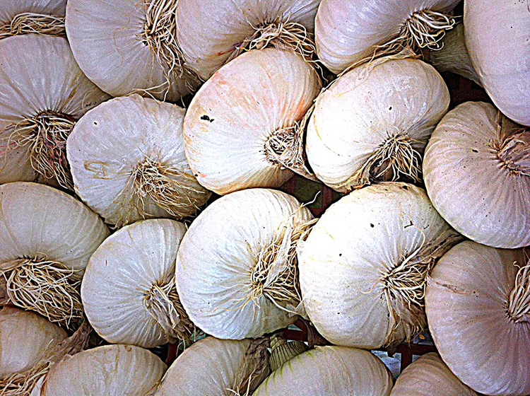 Onions, a concentration of beneficial properties